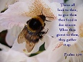 Psalm 104, Bee on a flower